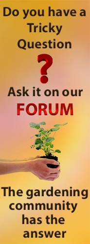 Ask the forum