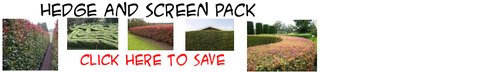 Hedge and Screen Pack