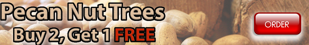 pecan - buy 2 gey one FREE