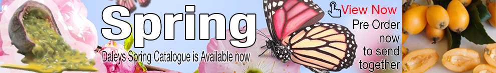Spring Catalogue is Available Now