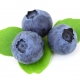 Legacy Blueberry Berries