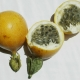 Passionfruit sweet Granadilla fruit display