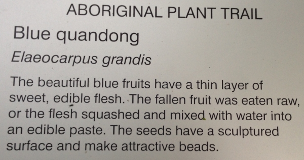 how to eat blue quandong