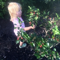 Exploring the Dwarf Mulberry Tree