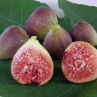 Fig Blue Provence