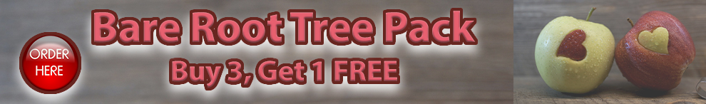 Buy 3 get 1 FREE bare root stock