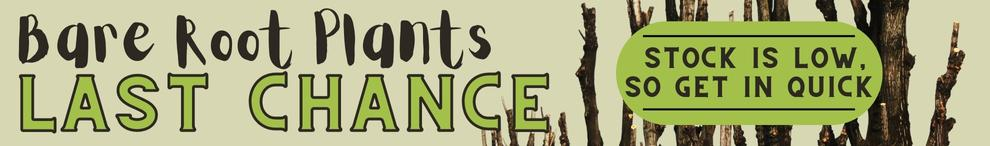 Bare root fruit trees just arrive