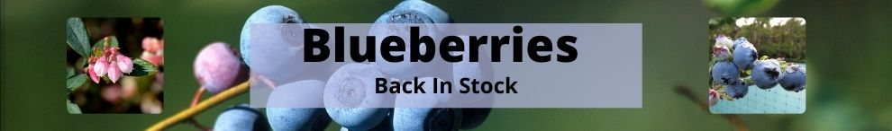 Blueberries are back in stock