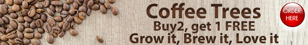 coffee buy 2 get 1 FREE