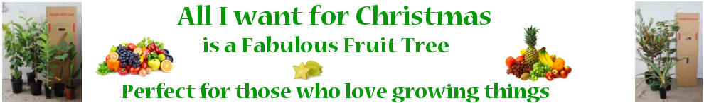 Fruit tree for Christmas