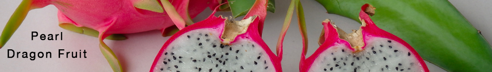 Dragon fruit are a vine that produce large flowers and fruit. The pearl variety has white flesh.