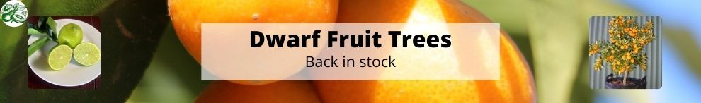 Lots of Dwarf Fruit Trees are now ready for Purchase