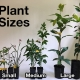 Different Plant sizes