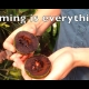 Timing is everything with Chocolate pudding fruit black Sapote