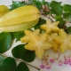 Carambola Giant Sam by Daleys Fruit Tree Nursery