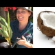 How to plant a coconut Palm Tree