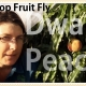 Protect from Fruit Fly using Netting