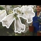Video White Jacaranda Flowering Grafted Tree