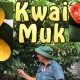 Kwai Muk Fruit Tree for Sale Kept Dwarf by cincturing using the dwarfing tool