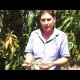 Mano Tree flower formation and the care of your tree YouTube