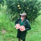 Carters Red Pummelo Pomelo taken by Greg Daley of https://www.daleysfruit.com.au at Fruit Forest Farm Visit