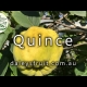 Growing Quince Fruit Trees