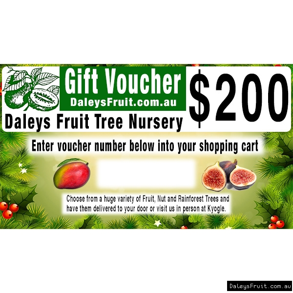 200 dollar Christmas Gift Voucher