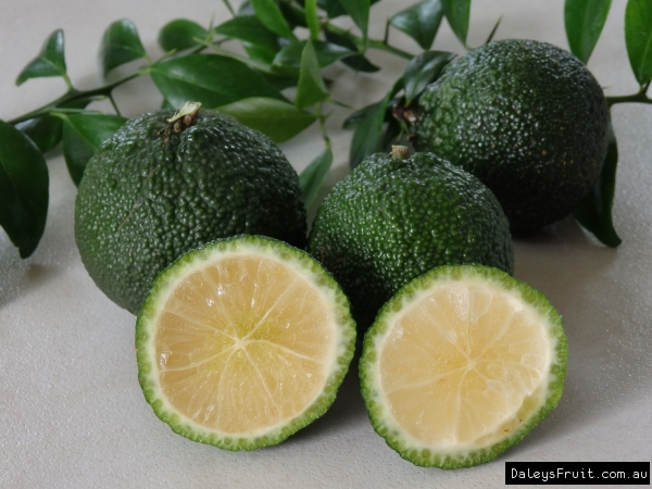 Australian Round Lime fruits