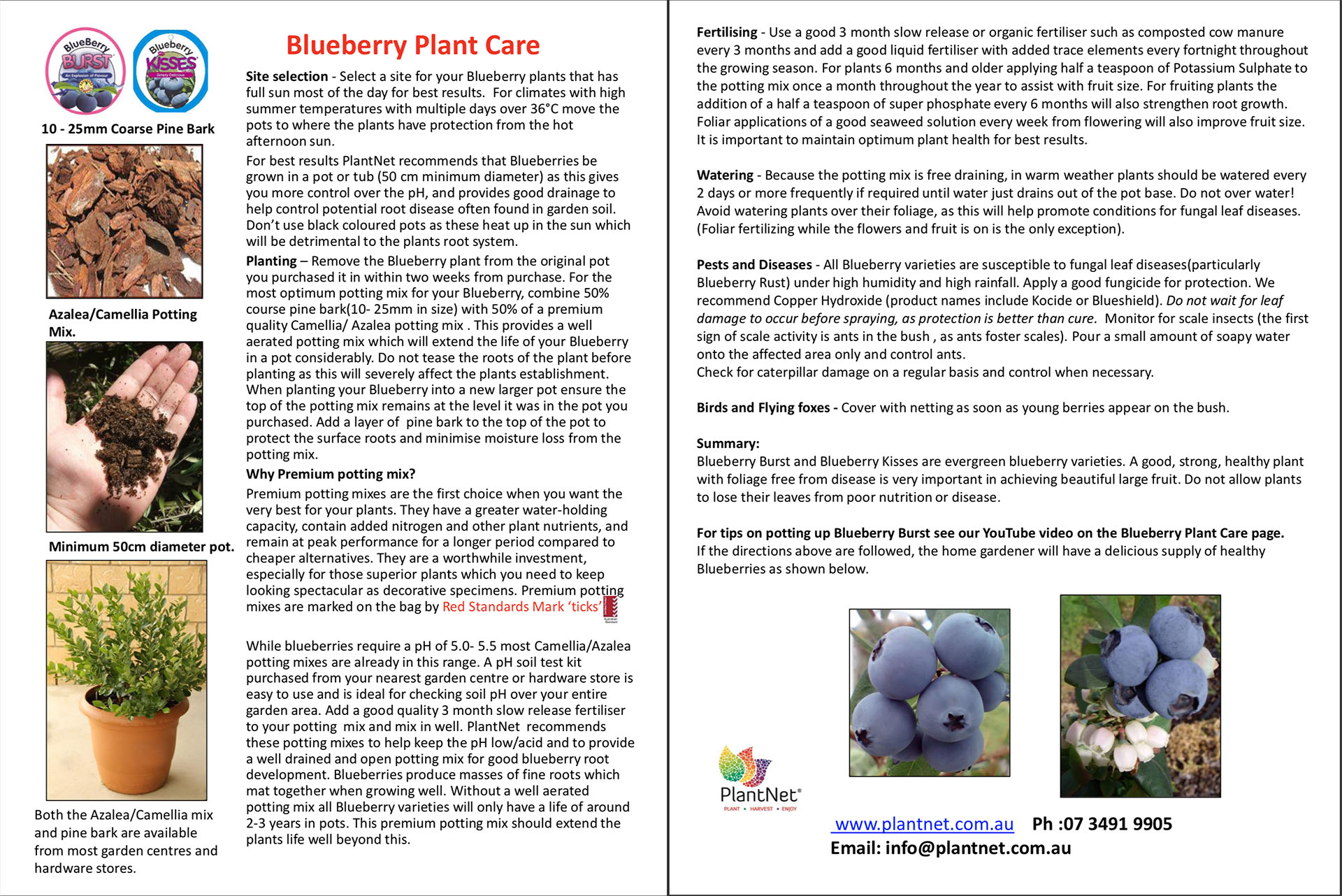 Blueberry Burst Plant Care Information Sheet