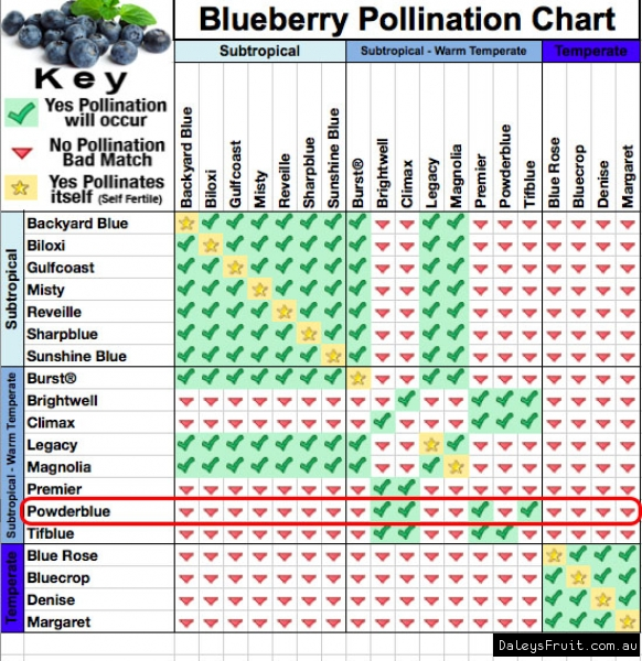 Powderblue Blueberry Plant Pollination chart