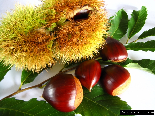 chestnut fruit