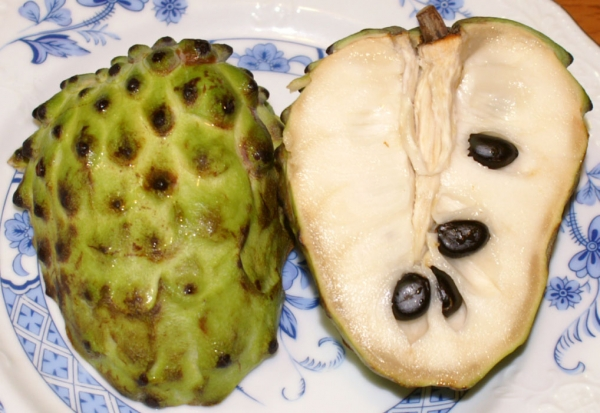Custard Apple Annona atemoya
