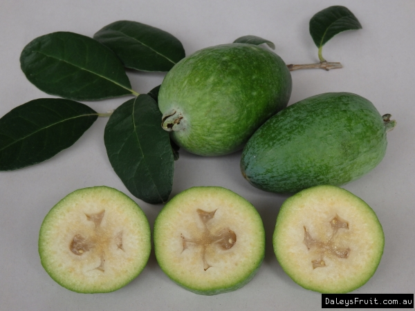 Feijoa Large Oval