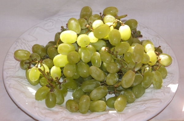 Grape Thompson Seedless