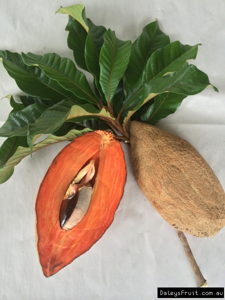 mammy Sapote - fruit