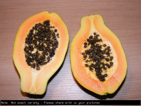 Papaya Fruit Not exact variety