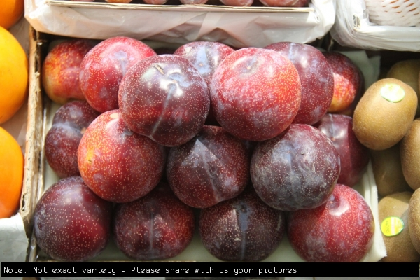 Plums siilar to the mariposa variety