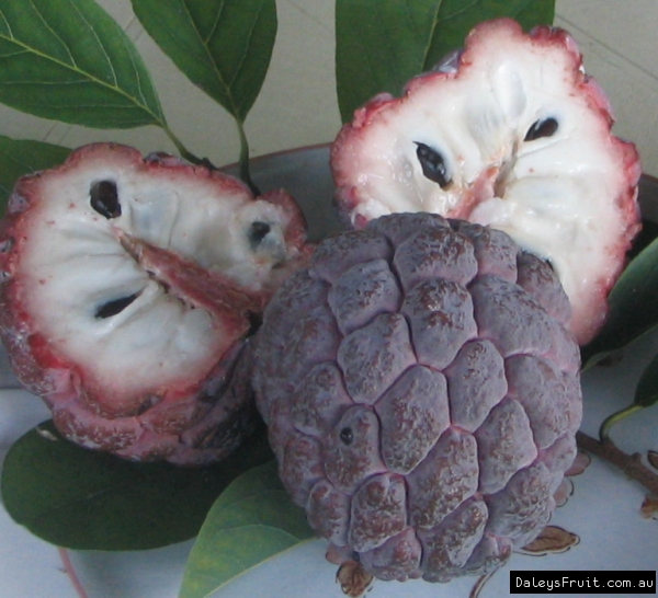Sweetsop - Purple Sugar Apple