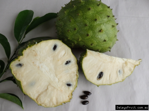 Soursop Fruit Trees for sale