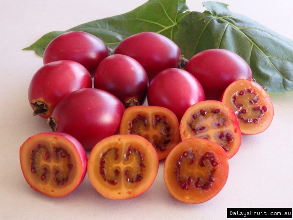 Tamarillo Red