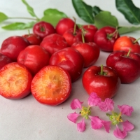 Acerola Cherries By DaleysFruit.com.au [All Rights Reserved]