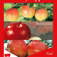 Multi Grafted Apple By Flemings Nurseries [All Rights Reserved, Supplier of DaleysFruit.com.au]