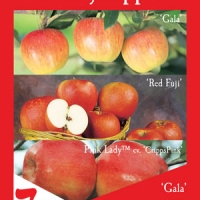 3 Way Apple Tree Gala, Fumi Gala By Flemings Nurseries [All Rights Reserved, Supplier of DaleysFruit.com.au]
