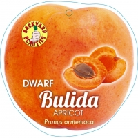 Apricot Bulida By PlantNet [All Rights Reserved, Supplier of DaleysFruit.com.au]