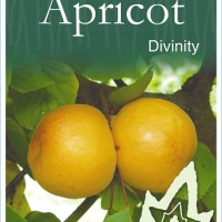 Apricot Divinity Plant label By JFT Nurseries [All Rights Reserved, Supplier of DaleysFruit.com.au]