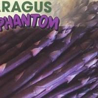 Purple asparagus pictorial showing purple asparagus Phantom seeds By Goodmanseeds [All Rights Reserved,Supplier of DaleysFruit.com.au]