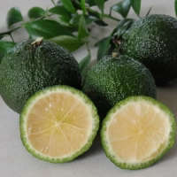 Australian Round Lime fruits By DaleysFruit.com.au [All Rights Reserved]