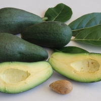 Avocado Fuerte By DaleysFruit.com.au [All Rights Reserved]