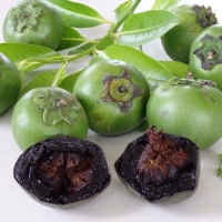Black Sapote Bernicker By DaleysFruit.com.au [All Rights Reserved]