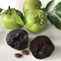 Black Sapote - Superb